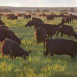 Животноводческая отрасль России обеспечена грубыми и сочными кормами на 109,8%