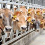 В Хабаровском крае запустят пять комплексов по производству мяса и молока