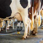 Кормоцентры становятся точками роста молочного животноводства в Татарстане