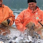 Более 1,5 млн тонн водных биоресурсов добыли российские рыбаки с начала года