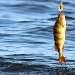 Плановые проверки в рыболовстве заменили на рейдовые мероприятия