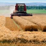 Рост сельхозпроизводства в 1-м квартале составил 3% — Росстат
