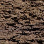 Аграрии юга РФ стали опасаться за урожай из-за вернувшихся заморозков и сухой почвы