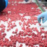 Заморозка ягод оказалась не очень прибыльным бизнесом для «Альфа-групп» — предприятие продаётся