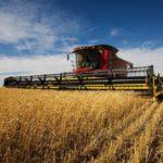 Урожай зерновых на Ставрополье может сократиться на треть из-за засухи