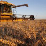 Аналитики начали снижать прогнозы сбора зерна в РФ в 2020 году