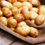 Картофелеводы Новой Зеландии требует временного запрета на импорт замороженного картофеля из ЕС