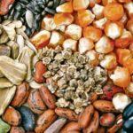 А. Майоров: Принятие законопроекта о семеноводстве станет важным шагом по реализации Доктрины продовольственной безопасности