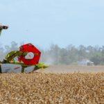 Девальвация, проблемы на таможне и подножка от властей: с чем столкнулись производители еды во время пандемии