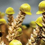 Президент НСА Корней Биждов: за 4 месяца в страховании растениеводства отмечен рост в 5 раз — до 469 млн рублей