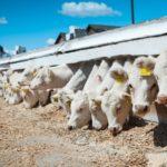 Интенсивное сельское хозяйство увеличивает риск эпидемий — ученые