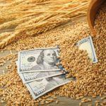 Отгрузки зерна на экспорт из России снижаются