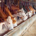 «Аладушкин Групп» продает долю в крупном молочном хозяйстве Ленобласти
