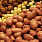 Управление Россельхознадзора по Калининградской области с начала года проконтролировало отправку на экспорт 772 тонн семенного картофеля