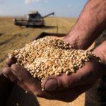 На Ставрополье экспорт сельхозпродукции за четыре месяца увеличился почти на 40%