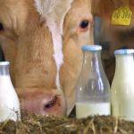 Валовое производство молока в Подмосковье увеличилось почти на 6%