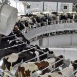 «Агросила» построит молочный комплекс в Азнакаево за 1,2 млрд рублей