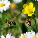 «ЭкоНива» расширит проект по использованию пчел-листорезов