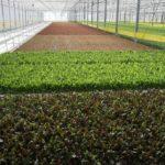 Овощеводческие предприятия Астраханской области обеспечены трудовыми ресурсами