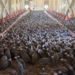 Аграрии Калужской области увеличивают выпуск экологически чистых продуктов