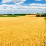 Компания экс-министра Александра Ткачева стала третьим в РФ владельцем сельхозземель