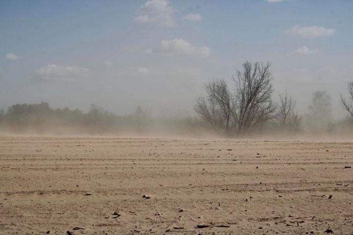 В Курской области пыльные бури уничтожили посевы