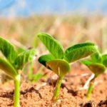 О начале сева сои в Амурской области