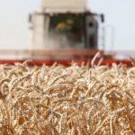 Эксперт рассказала о преждевременном созревании почвы в России