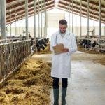 Фермеров предостерегли от чрезмерного использования антибиотиков для КРС