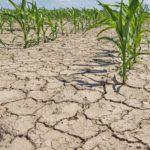 Дождливая погода стабилизировала состояние посевов на Ставрополье