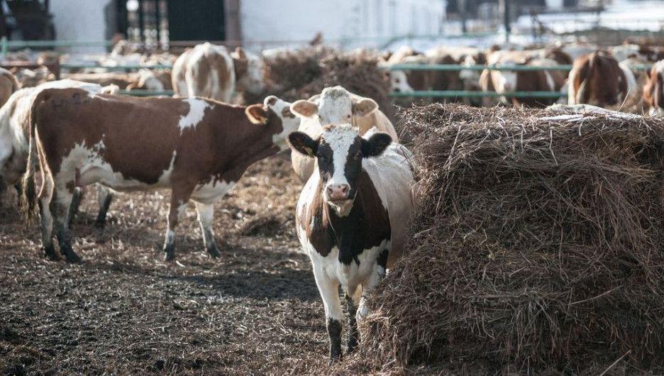 В Татарстане определены базовые хозяйства для внедрения цифровых технологий в животноводстве