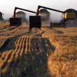 Минсельхоз повысил прогноз по урожаю зерна в России в 2020 году