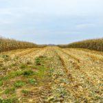 Качественный семенной материал – залог хорошего урожая.