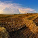 Глава АККОР перед совещанием с Путиным напомнил вице-премьеру РФ Виктории Абрамченко о проблемах фермеров