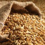 Производство зерна в России в 2020 году может составить 122,5 млн тонн