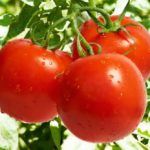 В теплицах Липецкой области собрали около 50 тыс. тонн овощей