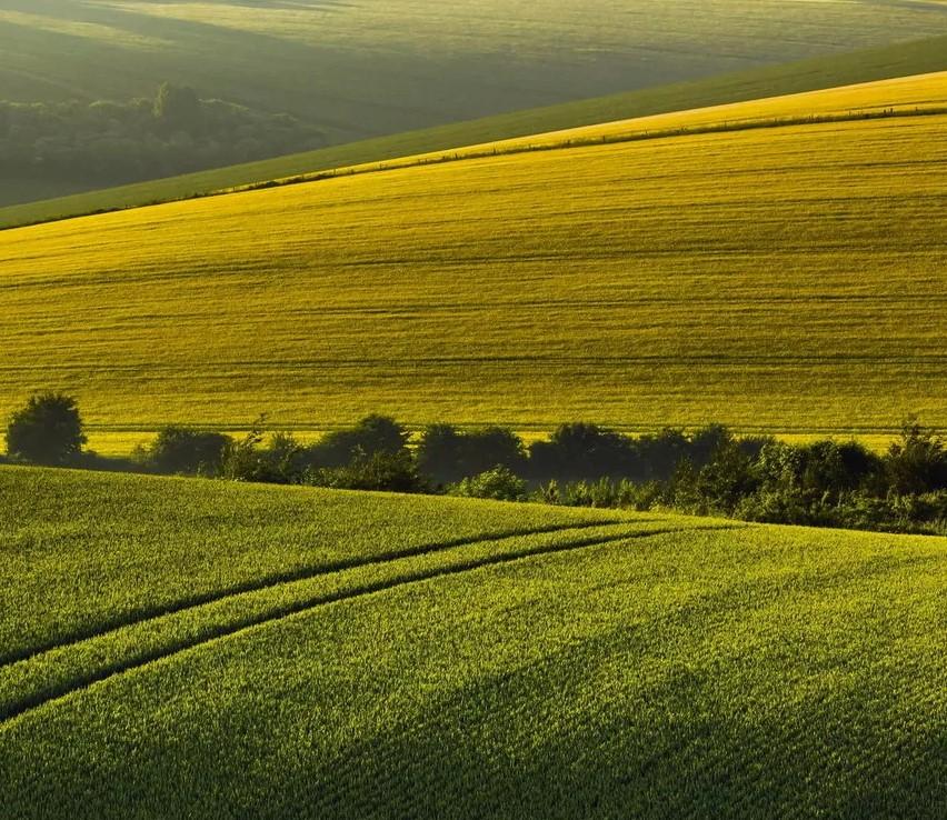 Здоровье с поля