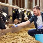 Фермеры пожаловались на удорожание кормов и их компонентов