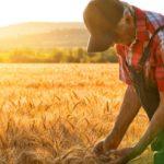 В ТПП заявили, что качество продукции фермеров в России может упасть