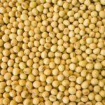 Ульяновские студенты выращивают пшеницу и сою для трех регионов