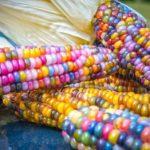 Что нужно знать о проекте обновлённого «Закона о семеноводстве»