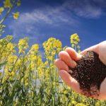 Объем реализации зерновых и масличных из Красноярского края вырос за пять лет в 2,5 раза