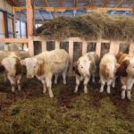 В Чувашии разработают механизмы поддержки личных подсобных молочных хозяйств