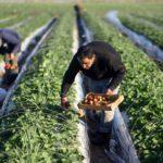 Производители органических продуктов просят о господдержке и налоговых льготах