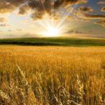 Верят ли аграрии в светлое будущее