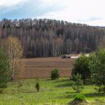 Алтайский край может недосчитаться урожая зерна пшеницы и гречихи из-за весенней засухи