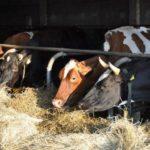 В Якутии за четыре месяца увеличилось поголовье скота и количество выпускаемой сельхозпродукции