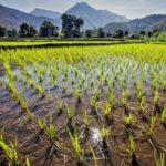 В Минсельхозе обсудили текущую ситуацию в подотрасли рисоводства