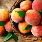 Первый в крае персиковый сад заложен на Ставрополье
