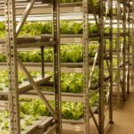 Сити-фермы для ресторанов и школ начали разрабатывать ставропольские ученые